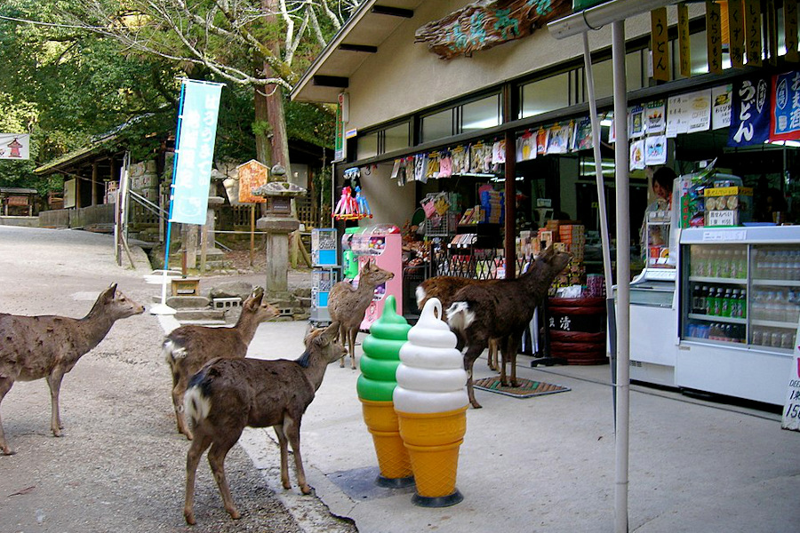 Japans Tiere auf Rückeroberungskurs